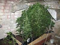 Срок за выращивание травы