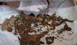 В Березовском обнаружены останки 5 новорожденных детей