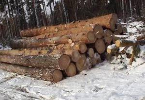 Чёрный лесоруб из села Петрокаменское получил два года условно