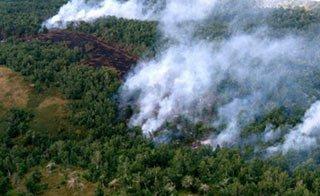 На Среднем Урале запущена онлайн-система мониторинга лесов