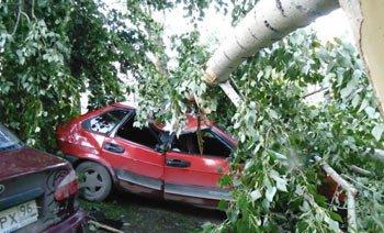 Ураган обрушился на Асбест, в городе повалены десятки деревьев