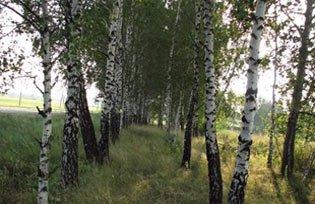 В лесополосе около села Николо-Павловское изнасиловали женщину