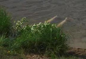 На Выйском пруду утонул 34-летний тагильчанин, на Ольховке - пенсионер