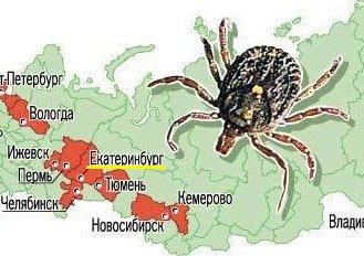 Клещи покусали более 26 тысяч жителей Свердловской области