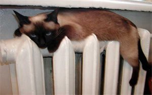 14 сентября батареи в квартирах тагильчан станут теплыми