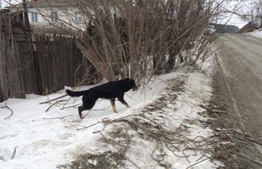 Спасатели вызволили собак из бетонного плена