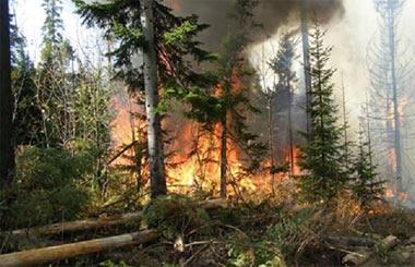 На Руднике сгорели две бани, в Висимском заповеднике - лес