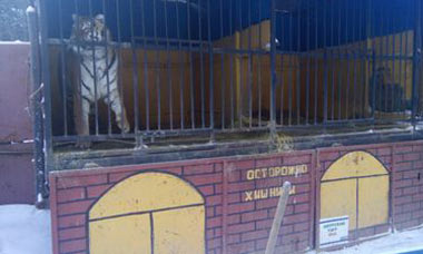 В тагильских зоопарках выявлены многочисленные нарушения