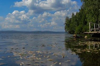В Черноисточинском пруду опять массово гибнет рыба