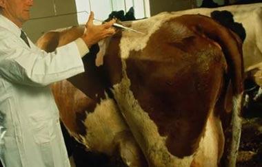 В Висимо-Уткинске могут построить сыроварню и молочную ферму