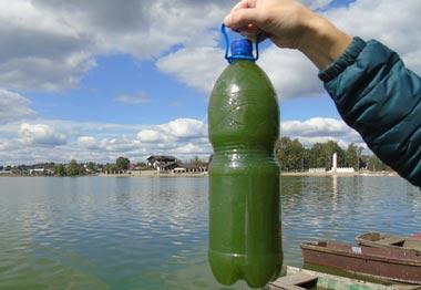 Эколог Волегов проверит воду Черноисточинского пруда на гельминты