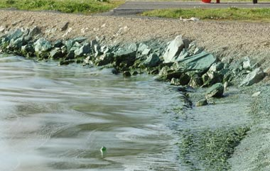В Нижнем Тагиле пройдут экологические пикеты